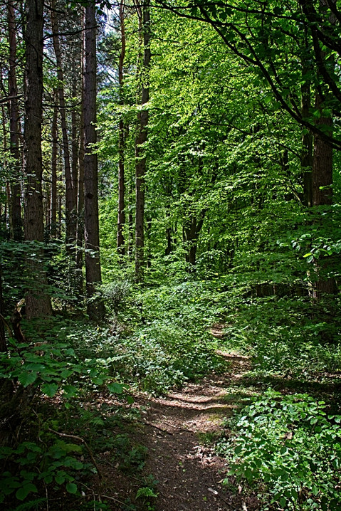 Beamish Woodland Pathway