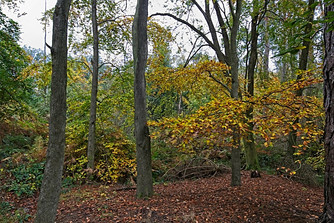 Autumn in Thornley Woods