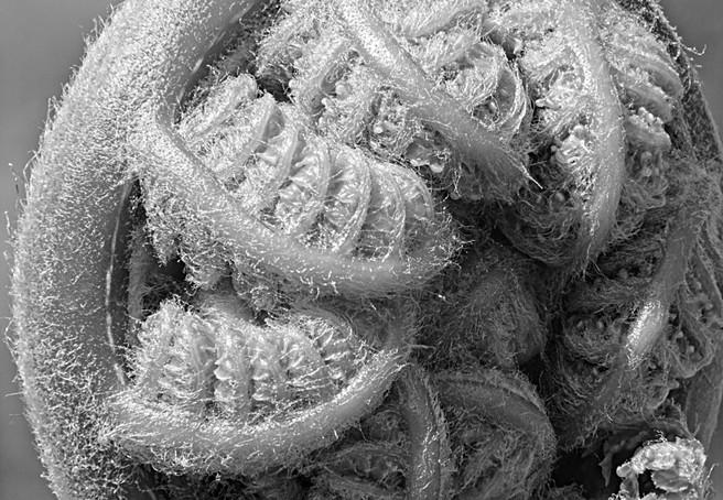 Tree Fern Close-up in Monochrome