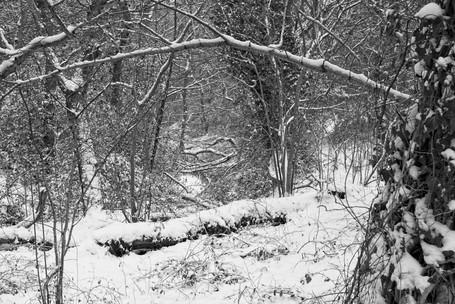 Winter Woodland, Thornley Woods