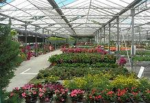 horticulteur-horticulture-saint-remy.jpg