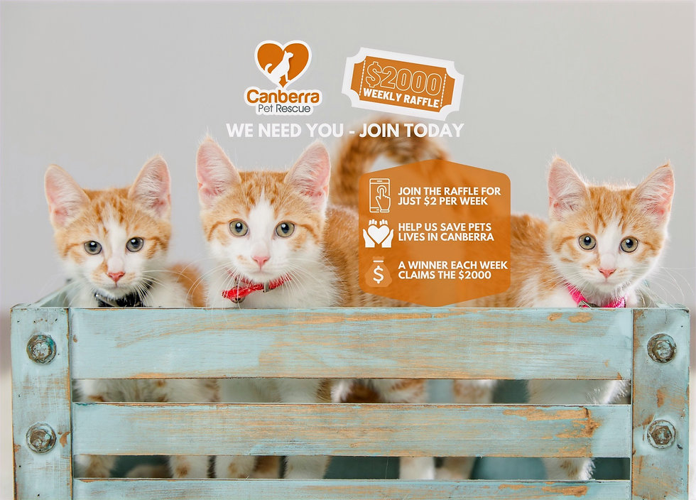canberra pet rescue