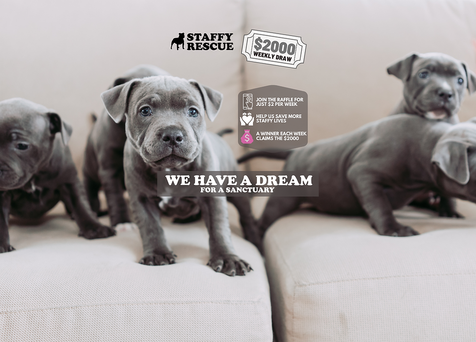 HOME Staffy Rescue-2.png