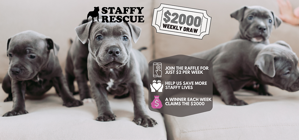 FAQ Staffy Rescue.png