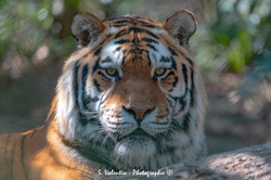 2019-03-31 Zoo Matin 051-11