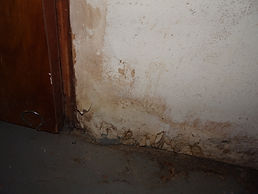 Water Damage and Suspected Mold