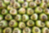 Coconuts background buy image