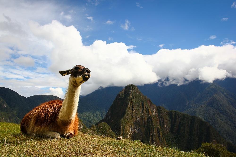 Machu Picchu llama naturaleza
