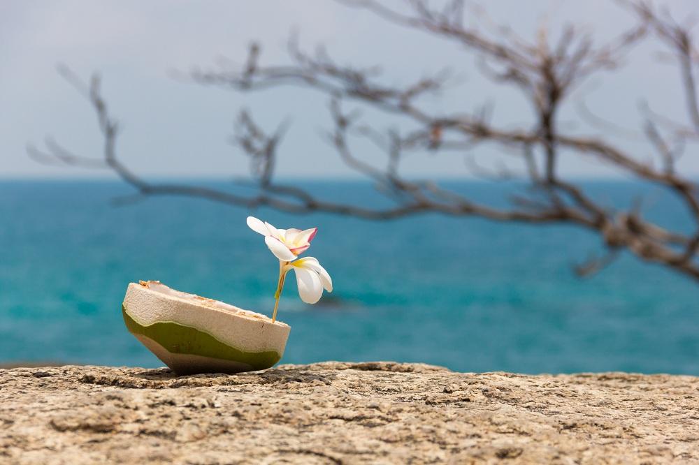coconut icecream product photography