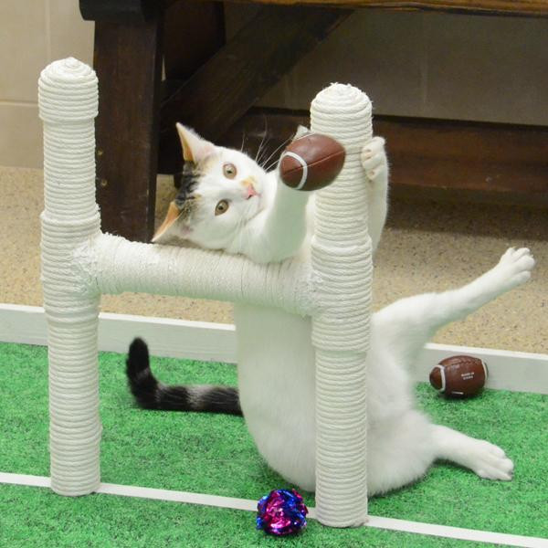 Photo of cat playing with a football with goal post as scratching post.