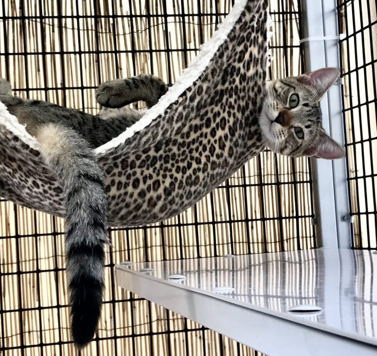 Photo of a kitty cat hanging out on the hammock.
