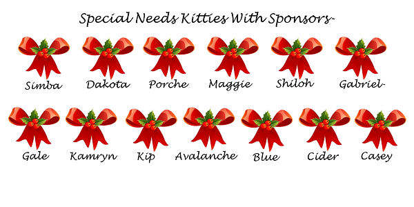 Special Needs Kitties with Sponsors fina