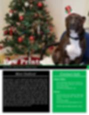 Paw Prints Winter 2019 -1.jpg