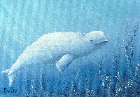Beluga Whale E-Packet
