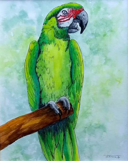 Military Macaw E-Packet
