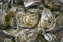 oystersun.jpg