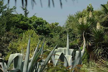 agave-americana.jpg