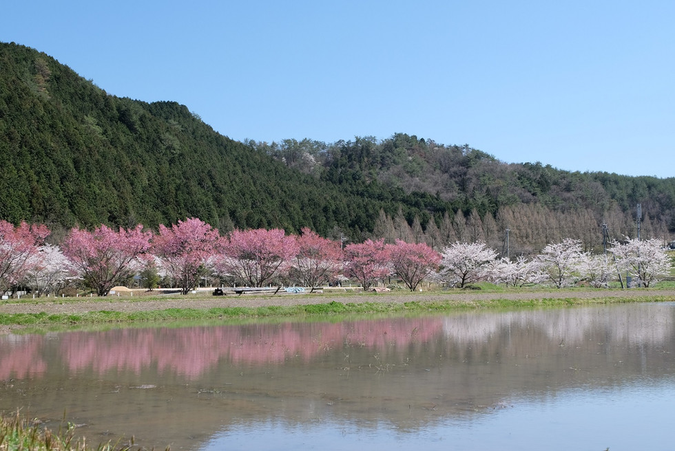 春の続く道(ato).jpg