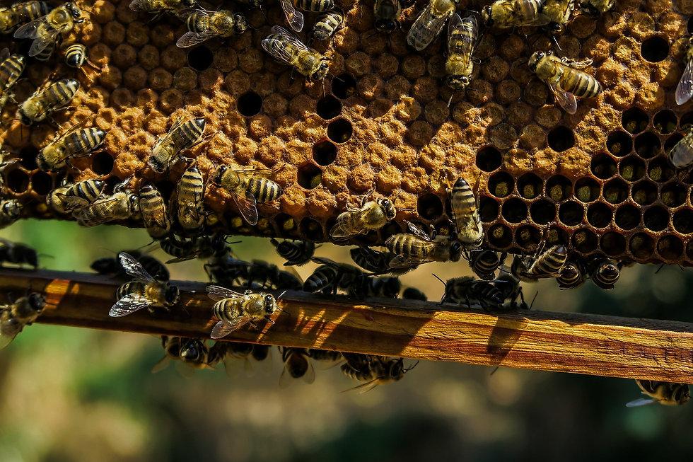 apiary-1867537_1920_edited.jpg