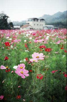flowers-692433_1280.jpg