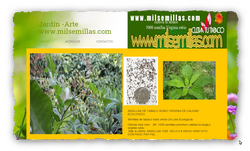 http://www.milsemillas.com
