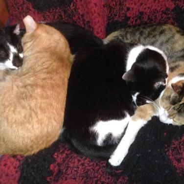 Cat Pile