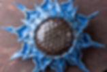 Fancy Sunflower Workshop