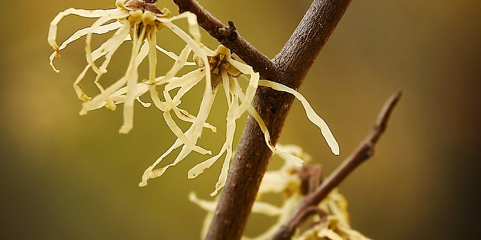 Native Trees, Shrubs and Vines for the Native Garden