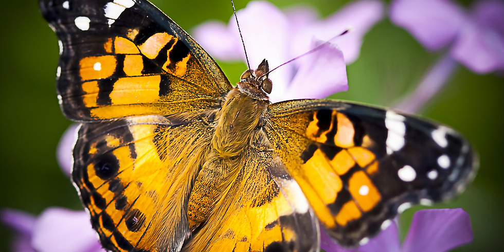 Pollinator Preservation Strategies for the Home Garden
