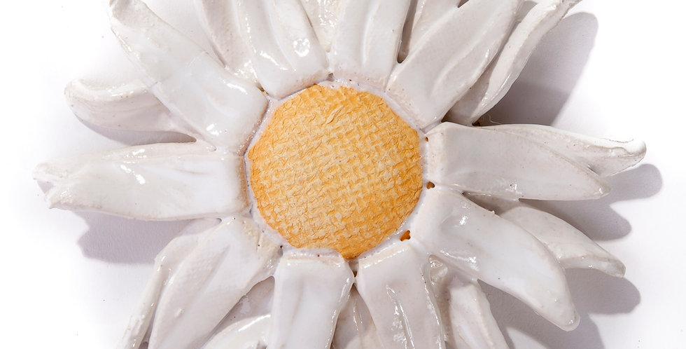Gerbera Daisy - White