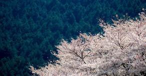 「春風の花を散らすと見る夢は覚めても胸のさわぐなりけり」