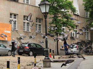 U Beogradu