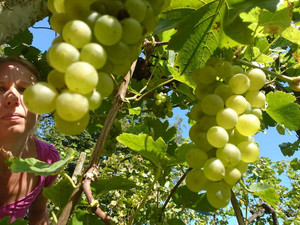Literature & Wine auf dem Versopolis Poetry-Blog
