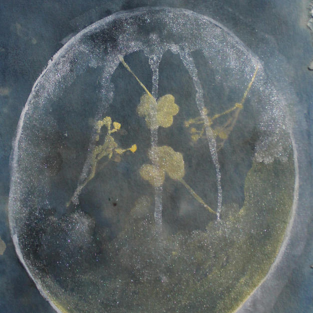 """little pickings, 5""""x7"""", Cyanotype and Ink, 2020"""