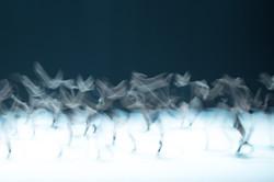 _DSC0411 Birds