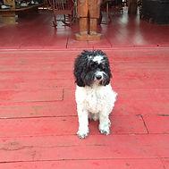 Sam the Shop Dog.JPG