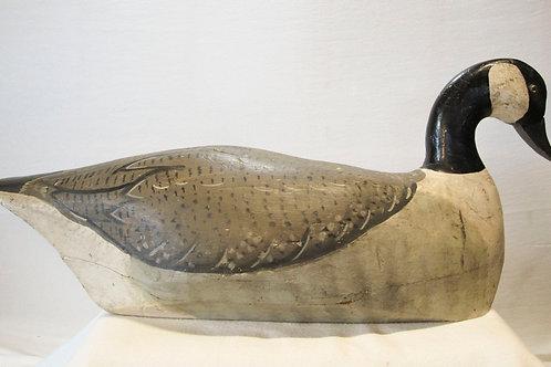 New England Canada Goose