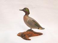 Robert Morse Green Wing Teal Miniature