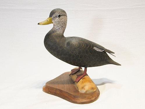 Veasey Black Duck