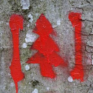 art4nature Auf Bäumen 01.jpg