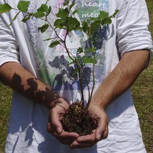art4nature #BäumeSetzen 02.jpg