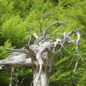 art4nature #BäumeSetzen 04.jpg