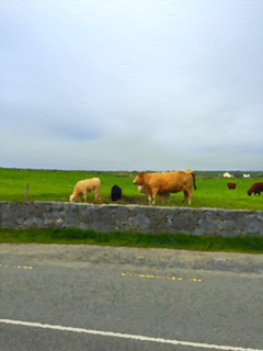 Irish Countryside 2