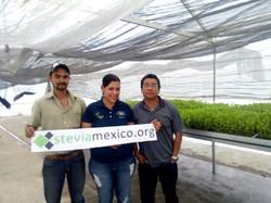 Stevia en Jalisco