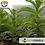 Thumbnail: Espirulina Orgánica en polvo 180 Cápsulas La Purísima - 100% Natural