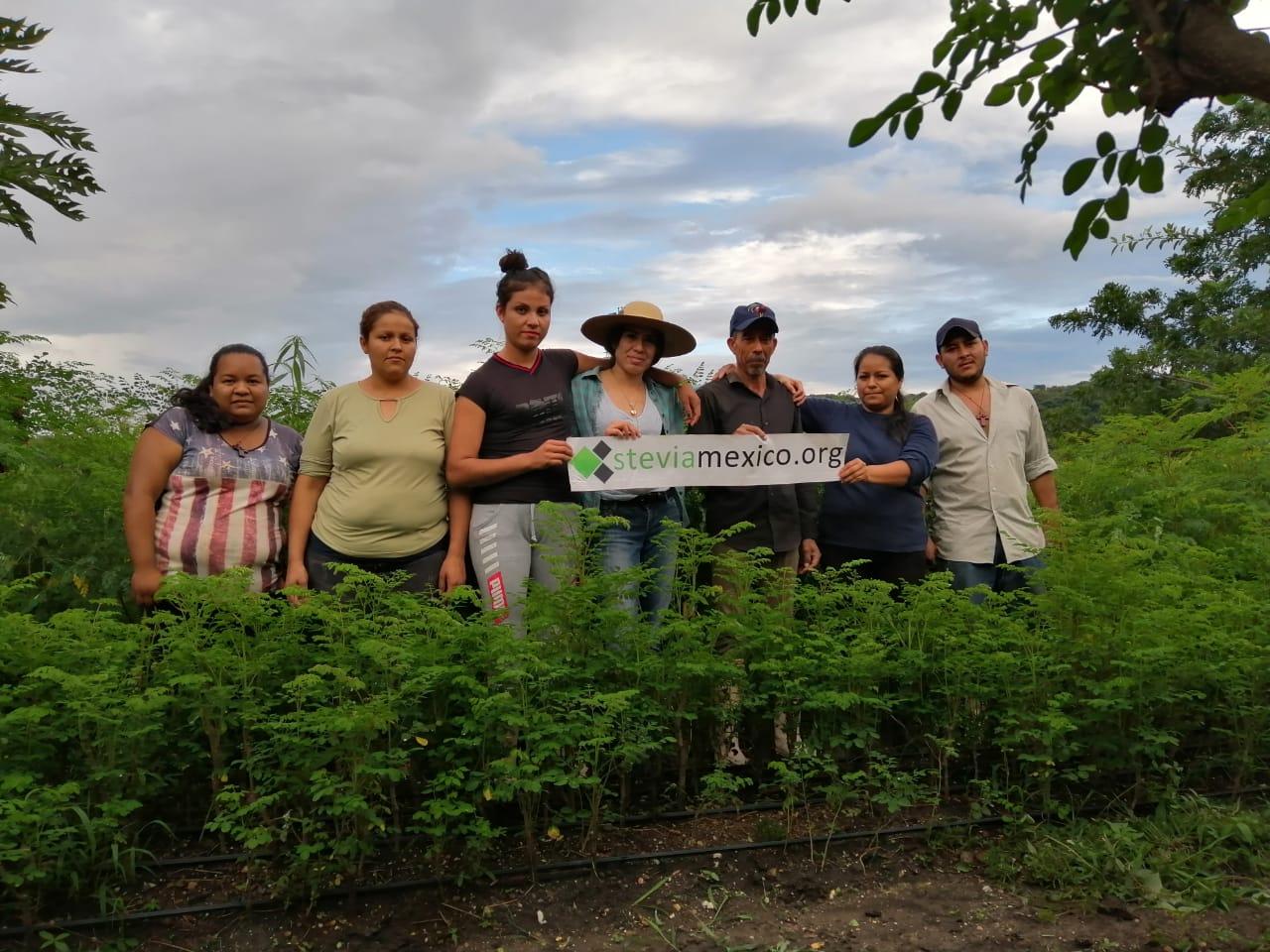 Cultivo de Moringa en Michoacán.