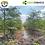 Thumbnail: 3,000 Semillas De Moringa Organica