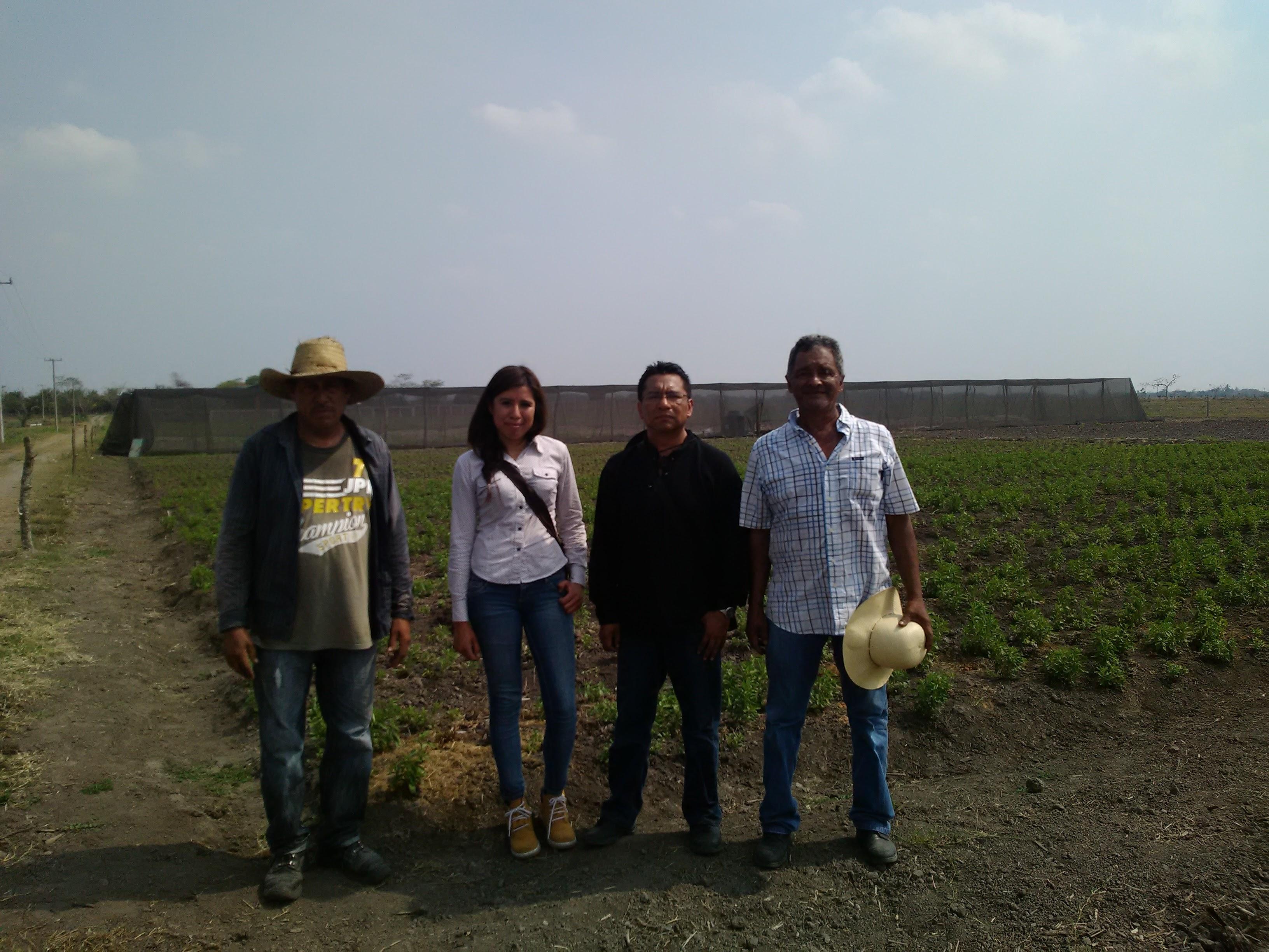 Stevia en Veracruz