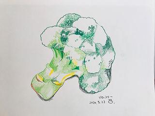 ブロッコリーの色鉛筆画!.jpg