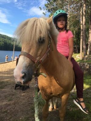 horses4 bambam.jpg